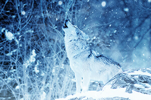 SOC-as-a-Service: The Arctic Wolf Approach to Cybersecurity